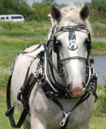 US made Draft Horse Diamond Spot Show Harness