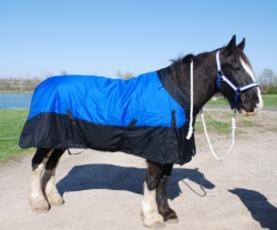 Draft Horse Turnout Blankets