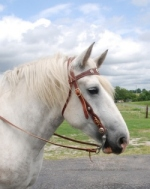 Amish made Ultimate brown draft horse bridle
