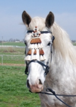 Draft Horse Spanish Bridle with Mosquero