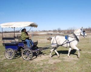 The Frontier Equestrian  Marathon Carriage - Blue and Silver