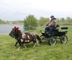 Frontier Mini Pleasure wagonette 1 or 2 horse drawn